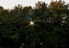 Zonnetje door de bomen (dijkgatbos 17-10-2014) #Zon #buienradar