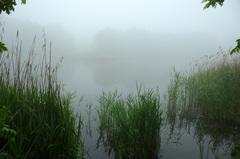Mist in Zuid Limburg #buienradar