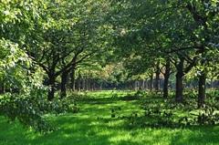 Begin #herfst op perenplantage, nog ff genieten van al dat groen #buienradar