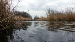 Vandaag grijs maar droog maar gaat de zondag weer in het water vallen? #buienradar