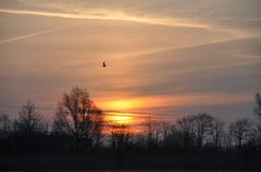 licht gesluierde lucht op zondagochtend boven zuidoost Brabant #buienradar