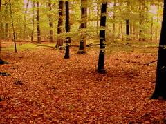 Herfst in optima forma, genieten ! #buienradar