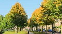 Prachtig hoe snel de bomen gaan kleuren #buienradar