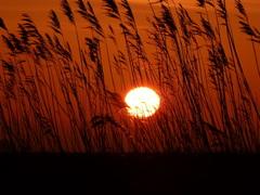 wauw Zonsopkomst  #buienradar