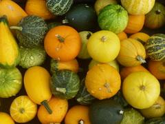 vruchten van het seizoen de herfst komt er aan #buienradar