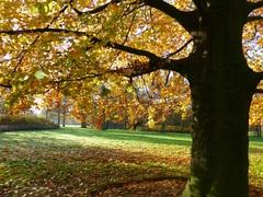 Dinsdagmorgen was het schitterend in het Sittardse stadspark #buienradar