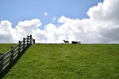 Prachtige wolkenluchten boven de schapen op de waddendijk #terschelling #buienradar