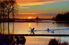 Toen de Zon opkwam op Donderdag 5 Maart,werd wat levendiger op het water van de Reeuwijkseplassen en ook de Ganzen waren in hun element! #buienradar