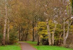Een pad met mooie Berkenbomen! #buienradar