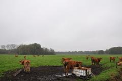 een grijze wereld op woensdag in zuidoost Brabant #buienradar