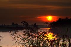 Een gesluierde Zonsopkomst op~Maandag 29 September,tussen het riet door bekeken! #buienradar