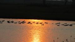 vrijdag 27.5 de ondergaande zon gaf een leuk effect op het water #buienradar