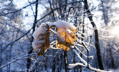 Winter @ Dwingelderveld #buienradar #sneeuw #zon