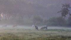 Dames in de mist om 6.20 uur #buienradar