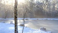 De zon smelt de sneeuw die op de takken van een berk is blijven liggen. Natuurgebied De Braak, Amstelveen, 30 jan 2015 om 10:06 AM. #buienradar