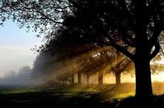 Zonnestralen #Doornenburg #buienradar
