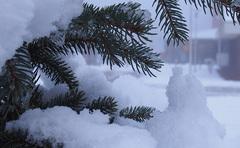 Vanmiddag (30-01-2015) nog veel #sneeuw in de tuin. #Buienradar #snow