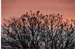 Vogels in rust voordat de avond valt. #buienradar