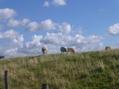 schapenwolkjes? Schagen NH #buienradar