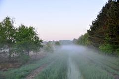 grondmistbanken op de vroege donderdagochtend in zuidoost Brabant #buienradar
