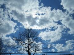 Wat  klein  lijkt  de  boom in  dit wolkenveld. #buienradar