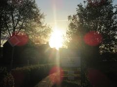 De zon schijnt noch even tussen de bomen door in Schin op geul ,voordat ze slapen gaat. #buienradar