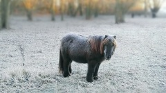 Brrr pony onder de rijp #Doornenburg #buienradar