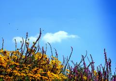 Een Zomerse dag,nog niet in September! #buienradar