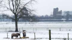 In Montfort na lichte vorst boven 2 cm sneeuwdek dooit het. Vee wordt bijgevoerd. #buienradar