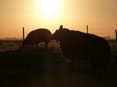 De schapen vonden het ook fris #buienradar