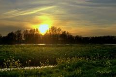 Zonsondergang op 28 April,in de Gouds/Reeuwijkse regio,tussen de koolzaad velden! #buienradar
