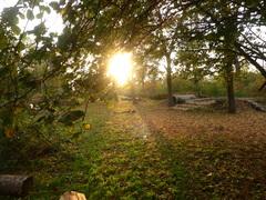 de zon gaat bijna onder in de natuurspeeltuin #buienradar