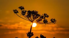 Licht bewolkte zonsopkomst op zondagmorgen #buienradar