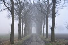 zuidoost Brabant is klein op zondagochtend door nevel en mist #buienradar