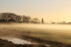 ganzen in de mist 24-11 #buienradar