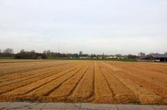 Herfstdag haarlemmermeer #buienradar