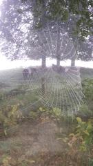 Vanmorgen zo rond 7.15 uur in het bos bij landgoed Beerschoten in De Bilt #buienradar