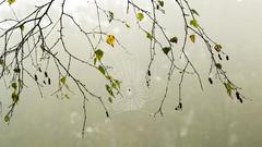 Nevel en spinnewebben in de bomen #buienradar