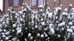 Precies onder jou raam zing ik mijn lied van sneeuw, blauwe druifjes  en vergeet me niet...! #buienradar