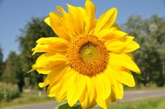 prachtig schitterend in de augustuszon op woensdag in zuidoost Brabant #buienradar
