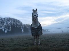 Bericht, is dit het paard van Sinterklaas niet, it`s not my cup of thee! #buienradar