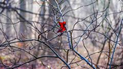 Er hangt nog 1 verloren herfstblad in het bos #buienradar #zon #lente #herfst