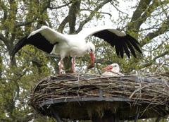 Ja ja, cadeautje meebrengen voor ,n warm nestje...maar waar ben je zo lang geweest? #buienradar