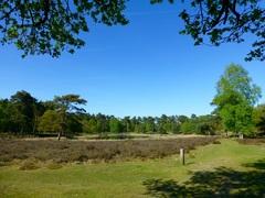 Heerlijk weer voor een mooie boswandeling op deze mooie Bevrijdingsdag #buienradar