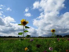 Klaarheid van de verwachting, ook ruimte voor zon en blauwe lucht! #buienradar