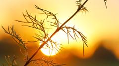 Gouden zonsopkomst om 8.20 uur uur in het rivierengebied #buienradar