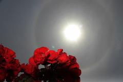 vanmorgen nog een mooie halo om de zon te zien #buienradar