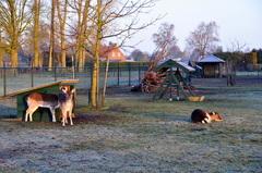 vrij helder met vorst aan de grond op woensdagochtend in zuidoost Brabant #buienradar