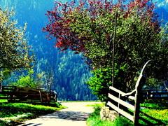 Een kleurig en mooi  bijna zomers plekje #buienradar
