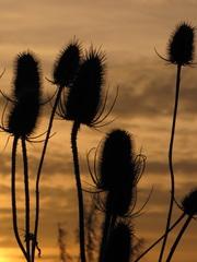 Tik je  bericht                Het mooie is er af van deze plant, maar in combinatie met de zon op de achtergrond geeft het toch een mooi sfeertje.     #buienradar
